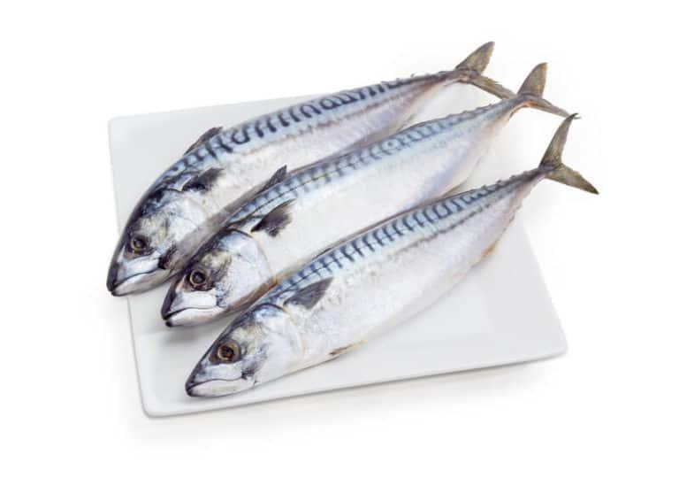 Atlantic Mackerel Whole