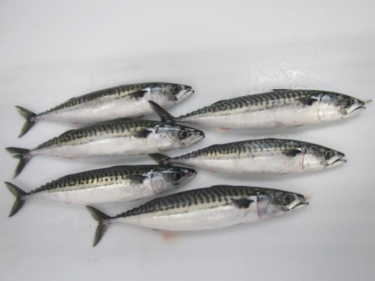 Frozen Seafood Suppliers, Frozen Seafood Exporters - CTLE Seafood, Inc