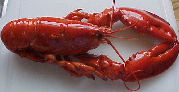 Canadian Lobster Whole Cooked Frozen 1
