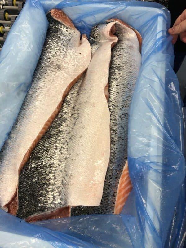 Iceland Atlantic Salmon Fillets