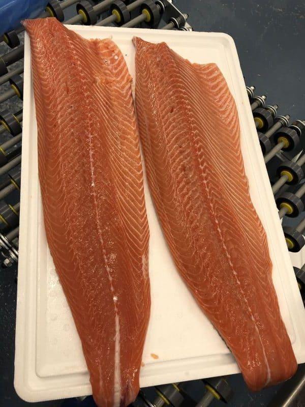 Fresh Atlantic Salmon Fillets Iceland