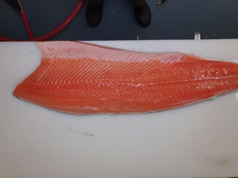 Frozen Atlantic Salmon Fillets Iceland