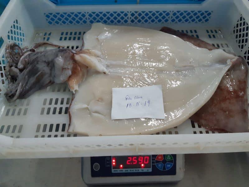 巨型鱿鱼蝴蝶切割
