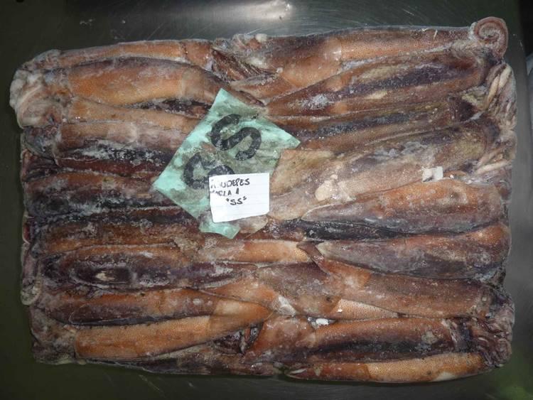 Illex Squid Whole 100-200 grams