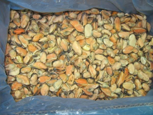 Chile Mussel Meat Suppliers Exporters
