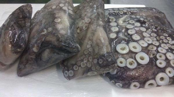 Octopus Mimus Suppliers Exporters