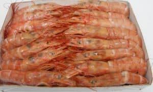 阿根廷红虾更新 – 2019年7月29日
