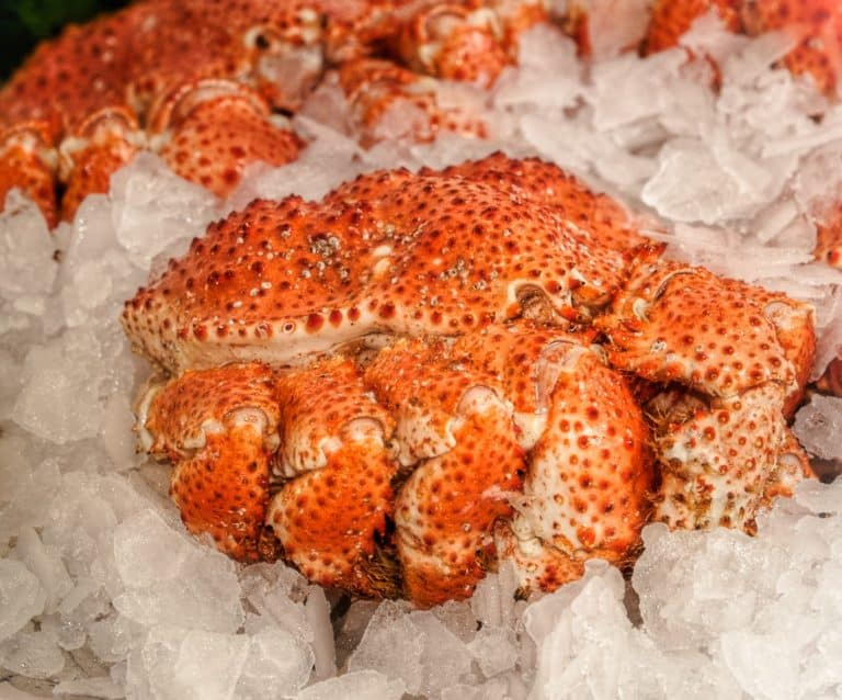 Snow Crab whole Suppliers Exporters