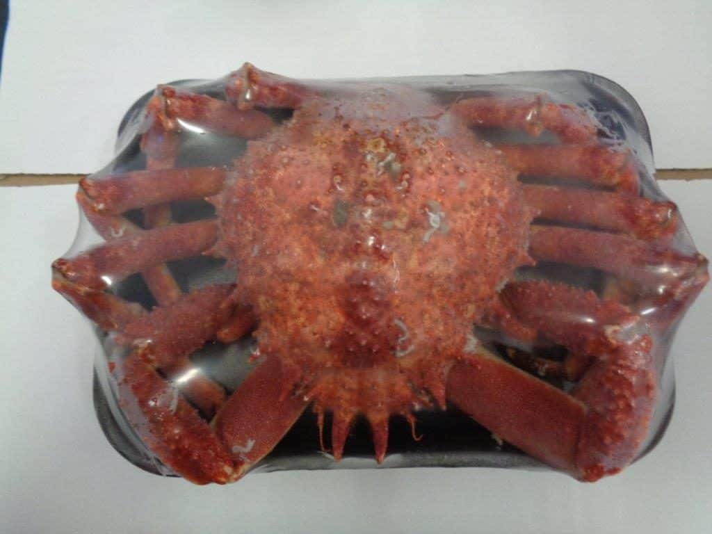 Spider Crab Whole Cooked Frozen Suppliers Exporters
