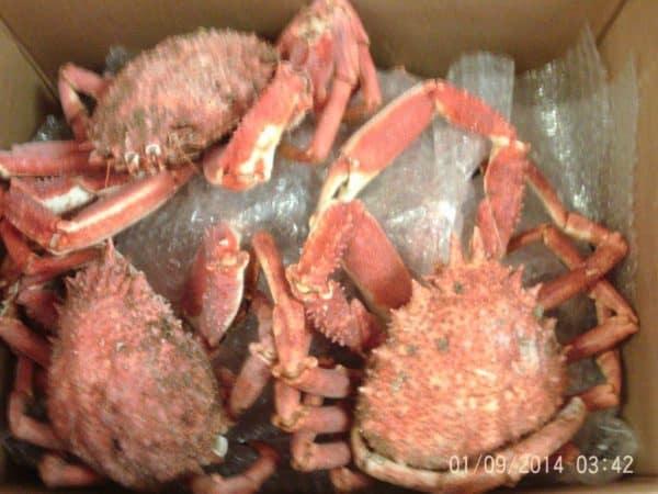 Spider Crab UK Suppliers, Exporters