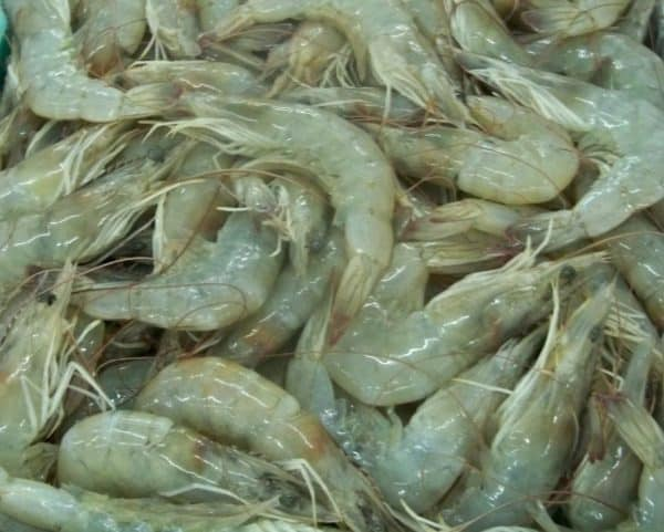 Vannamei Shrimp HOSO Suppliers Exporters