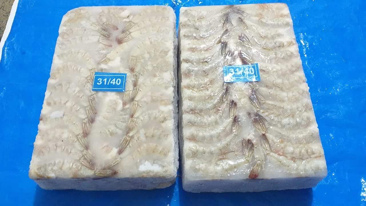 Vannamei Shrimp Supplier