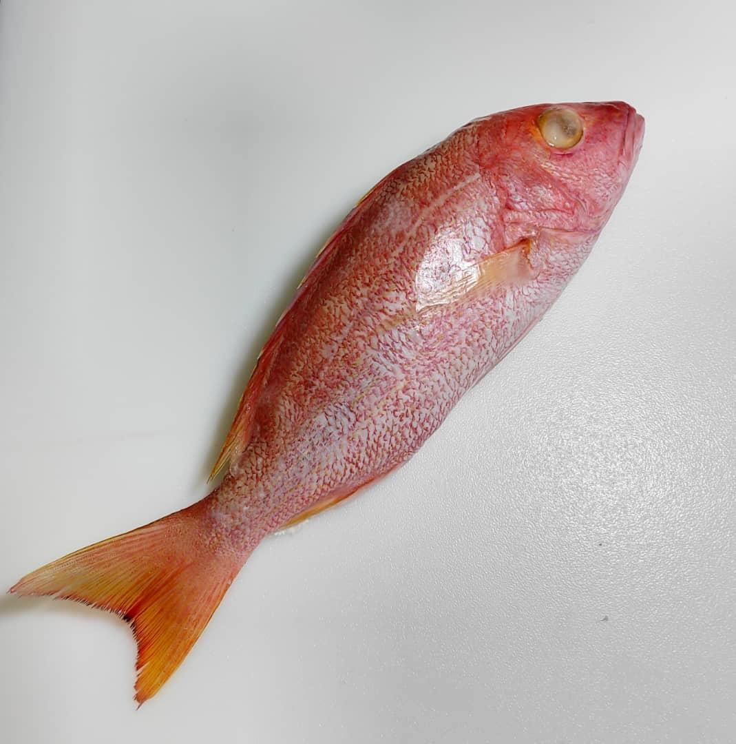 黄眼鲷鱼、红鲷鱼